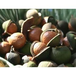 Huile de macadamia : hydratante