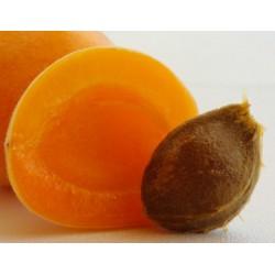 Huile de noyau d'abricot  bio : nourrissante