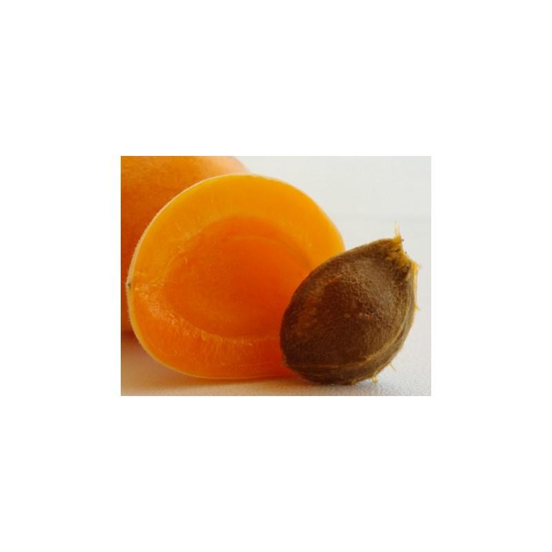 Huile de noyau d 39 abricot bio nourrissante - Planter noyau d abricot ...