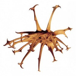 Harpagophytum- 50ml : Extrait Phyto