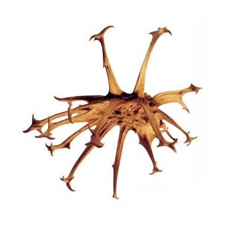 Harpagophytum 50ml