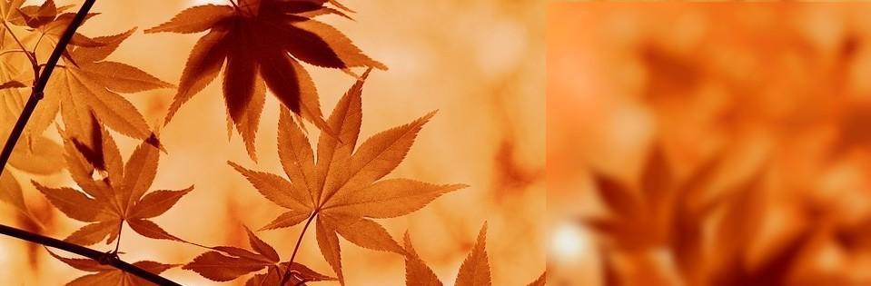Spécialiste des produits bio & naturels